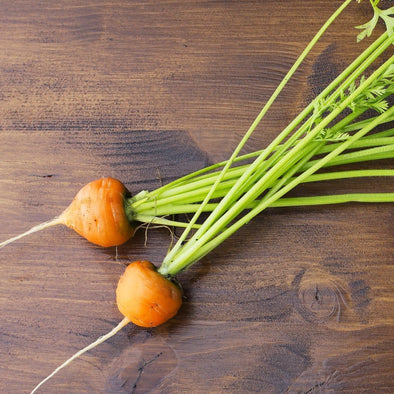 Carrot Atlas - (Daucus Carota Sativus) Seeds