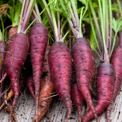 Carrot Cosmic Purple - (Daucus Carota Sativus) Seeds