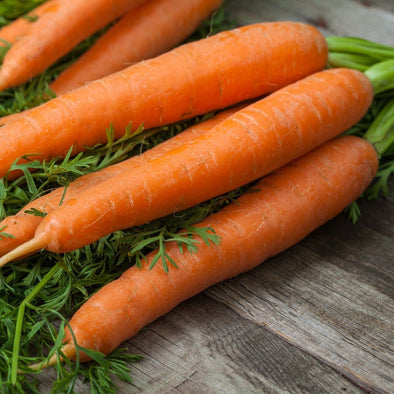 Carrot Little Fingers - (Daucus Carota Sativus) Seeds