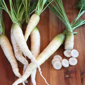 Carrot Lunar White - (Daucus Carota Sativus) Seeds