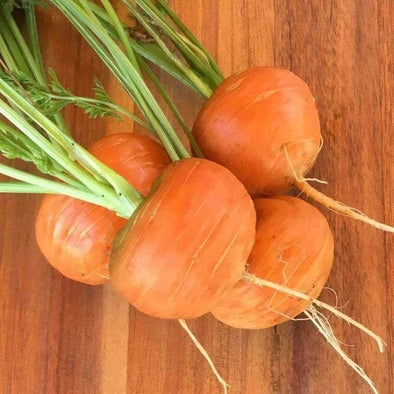 Carrot Parisian - (Daucus Carota Sativus) Seeds