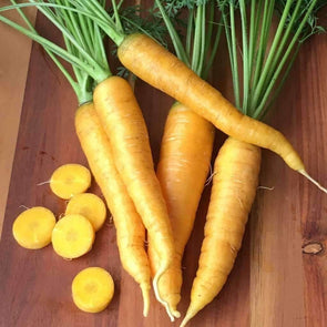 Carrot Solar Yellow - (Daucus Carota Sativus) Seeds