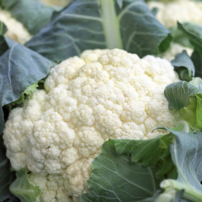 Cauliflower Snowball Self Blanching - (Brassica Oleracea Botrytis) Seeds