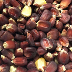 Corn (Dent) Bloody Butcher - (Zea Mays) Seeds