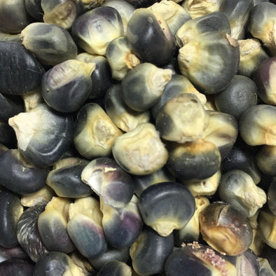 Corn (Flint) Hopi Blue - (Zea Mays) Seeds