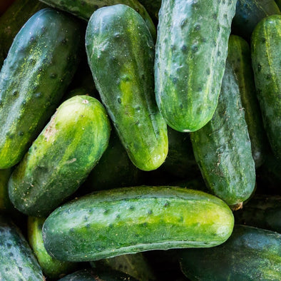 Cucumber National Pickling - (Cucumis Sativus) Seeds