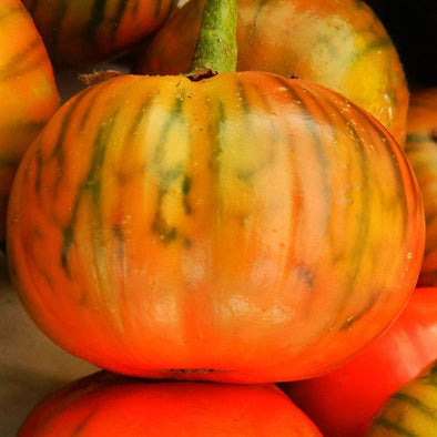 Eggplant Turkish Orange - (Solanum Melongena) Seeds