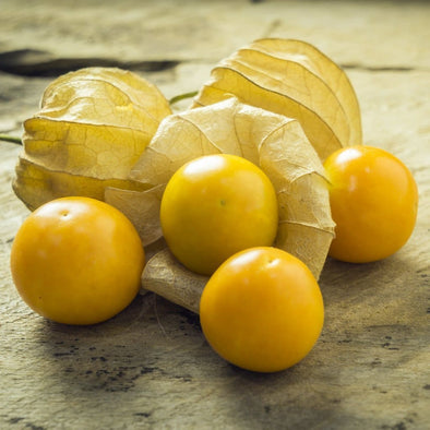 Ground Cherry Aunt Mollys - (Physalis Peruviana) Seeds