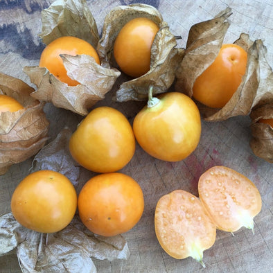 Ground Cherry Giant Poha Berry - (Physalis Peruviana) Seeds