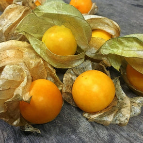 Ground Cherry Pineapple - (Physalis Peruviana) Seeds