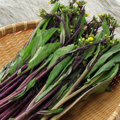 Kosaitai (Purple Stem Flowering Brassica) - (Brassica Rapa Purpurea) Seeds