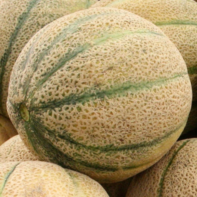 Melon 'Hales Best Jumbo' - (Cucumis melo 'cantalupo')
