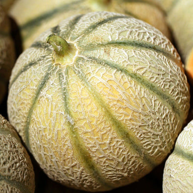 Melon 'Hearts of Gold' - (Cucumis melo 'cantalupo')