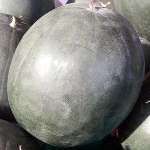 Melon (Watermelon) Black Diamond - (Citrullus Lanatus) Seeds