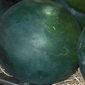 Melon (Watermelon) Blacktail Mountain - (Citrullus Lanatus) - Ossi Seeds