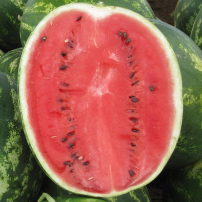 Melon (Watermelon) Crimson Sweet - (Citrullus Lanatus) Seeds