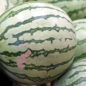 Melon (Watermelon) Dixie Queen - (Citrullus Lanatus) Seeds