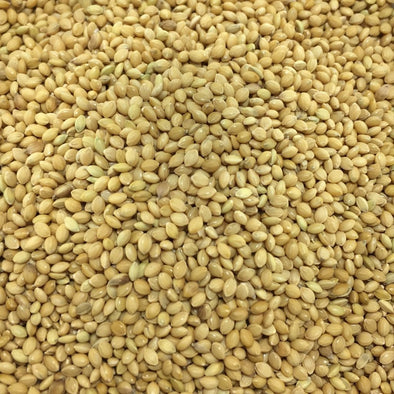 Millet Foxtail (Common) - (Setaria Italica) Seeds