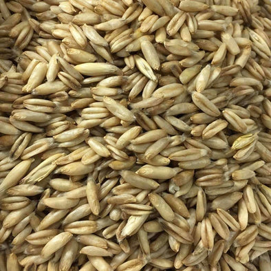 Oats Streaker Hulless - (Avena Nuda) Seeds
