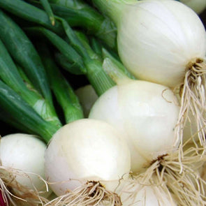 Onion Crystal White Wax - (Allium Cepa) Seeds