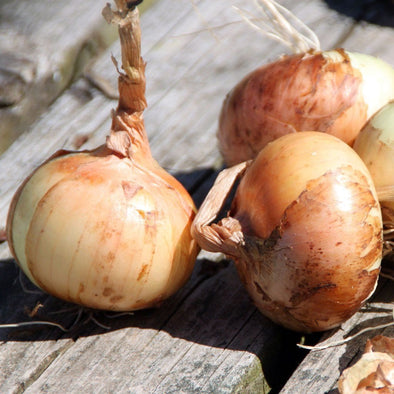 Onion Walla Walla - (Allium Cepa) Seeds