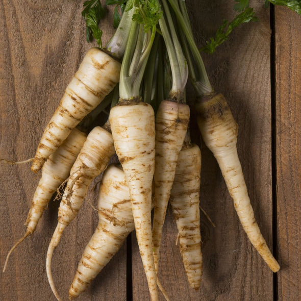 Parsley (Root) Halblange - (Petroselinum Crispum Tuberosum) Seeds