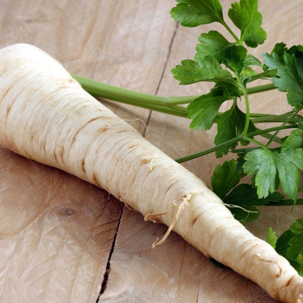 Parsnip 'Cobham Improved' - (Pastinaca sativa)