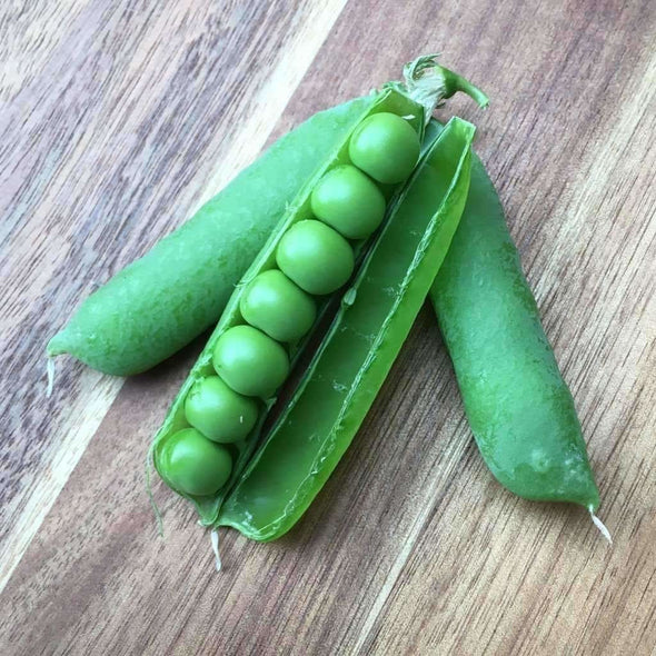 Pea Early Frosty - (Pisum Sativum) Seeds