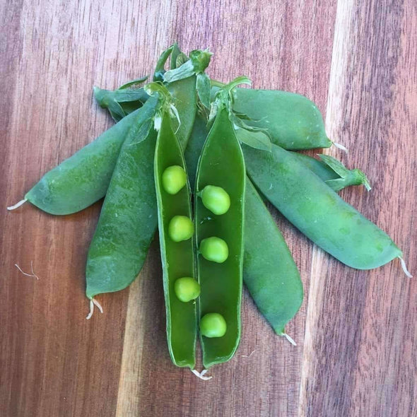 Pea Little Marvel - (Pisum Sativum) Seeds