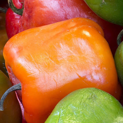 Pepper (Hot) Manzano (Orange) - (Capsicum Pubescens) Seeds