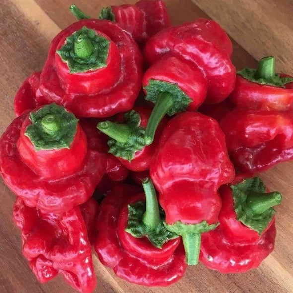Pepper (Hot) Scotch Bonnet (Tobago Red) - (Capsicum Chinense) Seeds