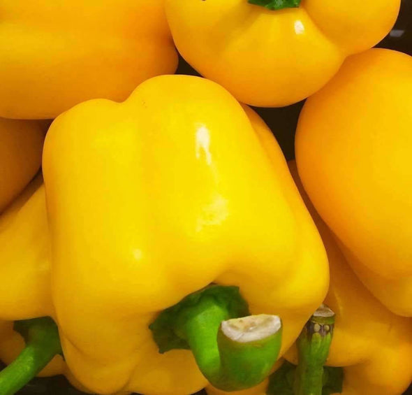 Pepper (Sweet) Golden California Wonder - (Capsicum Annuum) Seeds