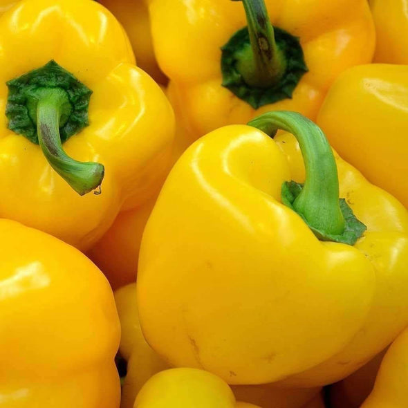 Pepper (Sweet) Sunbright - (Capsicum Annuum) Seeds