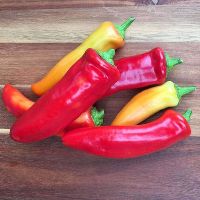 Pepper (Sweet/hot) Hungarian Hot Wax - (Capsicum Annuum) Seeds