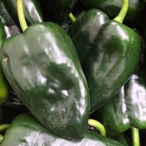 Pepper (Sweet/hot) Pablano - (Capsicum Annuum) Seeds