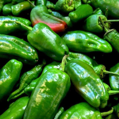 Pepper (Sweet/hot) Padron - (Capsicum Annuum) Seeds
