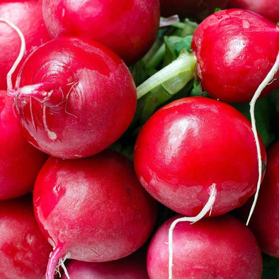 Radish 'Champion' - (Raphanus sativus)