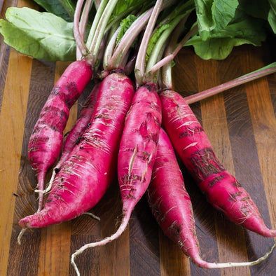 Radish China Rose - (Raphanus Sativus) Seeds