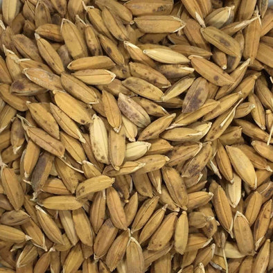 Rice Carolina Gold - (Oryza Sativa) Seeds
