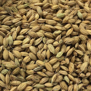 Rice Duborskian - (Oryza Sativa) Seeds
