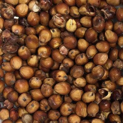 Sorghum Mennonite - (Sorghum Bicolor) Seeds