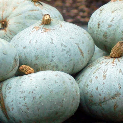 Squash (Winter) Sweet Meat - (Cucurbita Maxima) Seeds