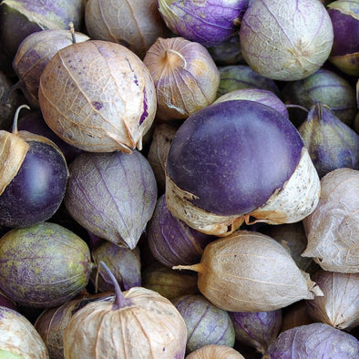 Tomatillo Purple - (Physalis Philadelphica) Seeds