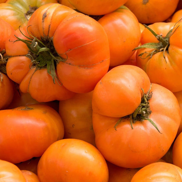 Tomato Amana Orange - (Solanum Lycopersicum) Seeds
