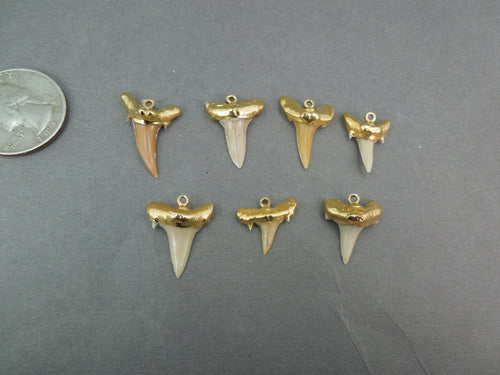 Real Shark Tooth pendant Charm dipped in electroplated 24k gold-- Small Shark Tooth Pendant S3b11-11 Made in the USA