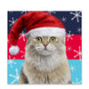 Help for Heroes Festive Cat Christmas Cards - Pack of 10
