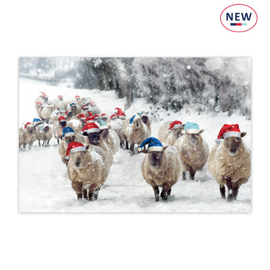 Help for Heroes Sheep in Tri Colour Hats- pack of 10