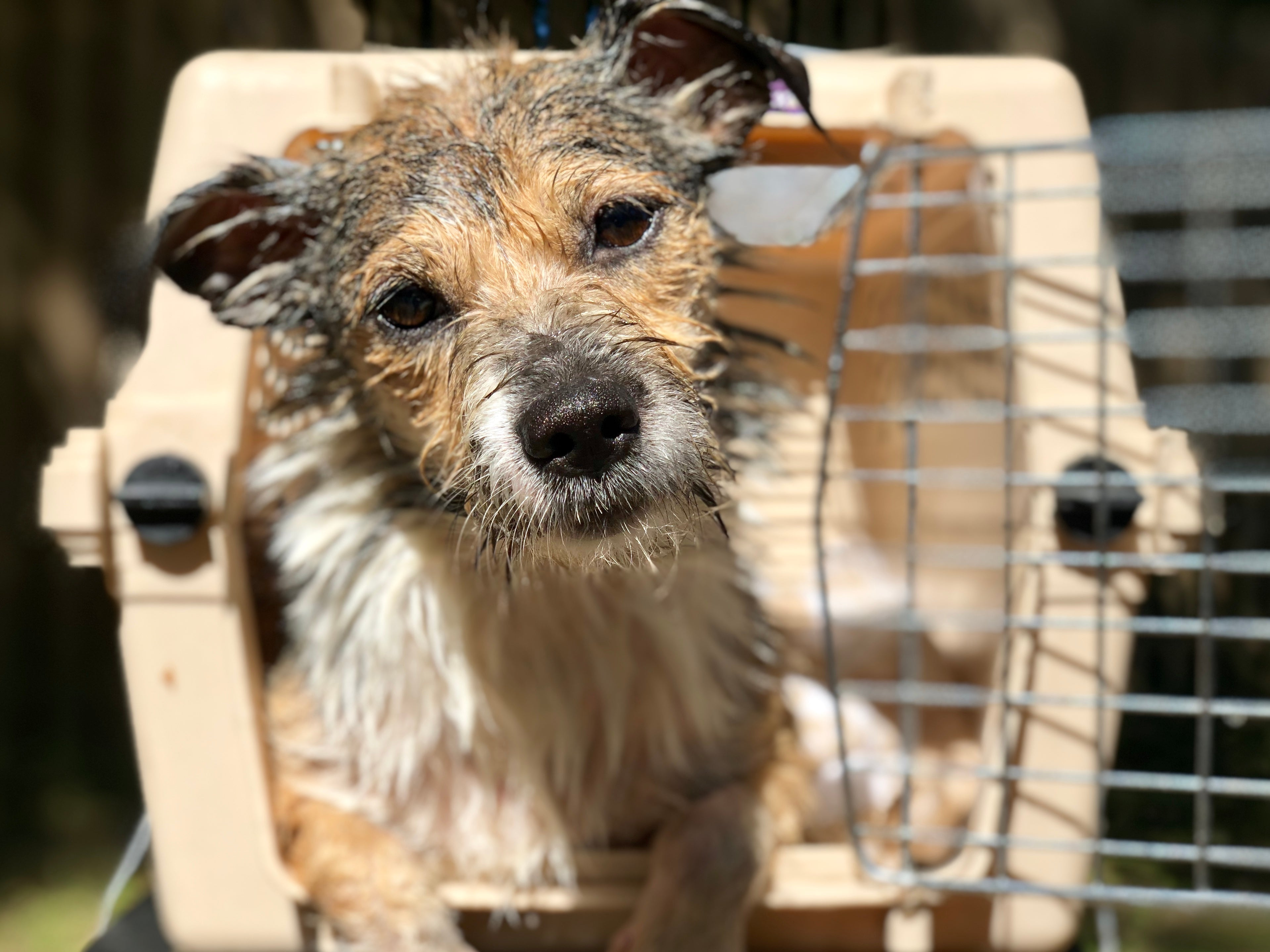 Hurricane Dorian: Help People and Pets Now