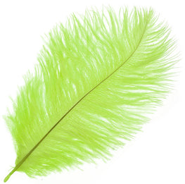 "Ostrich Drab Feathers - Lime (3""-6"")"