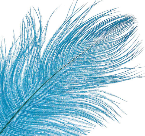 "Ostrich Drab Feathers - Turquoise (3""-6"")"